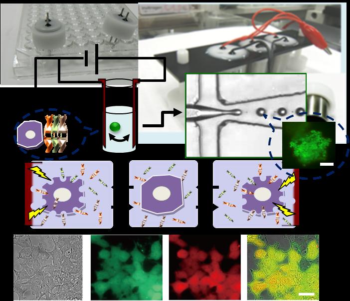 オンチップiPS細胞量産ファクトリーの開発
