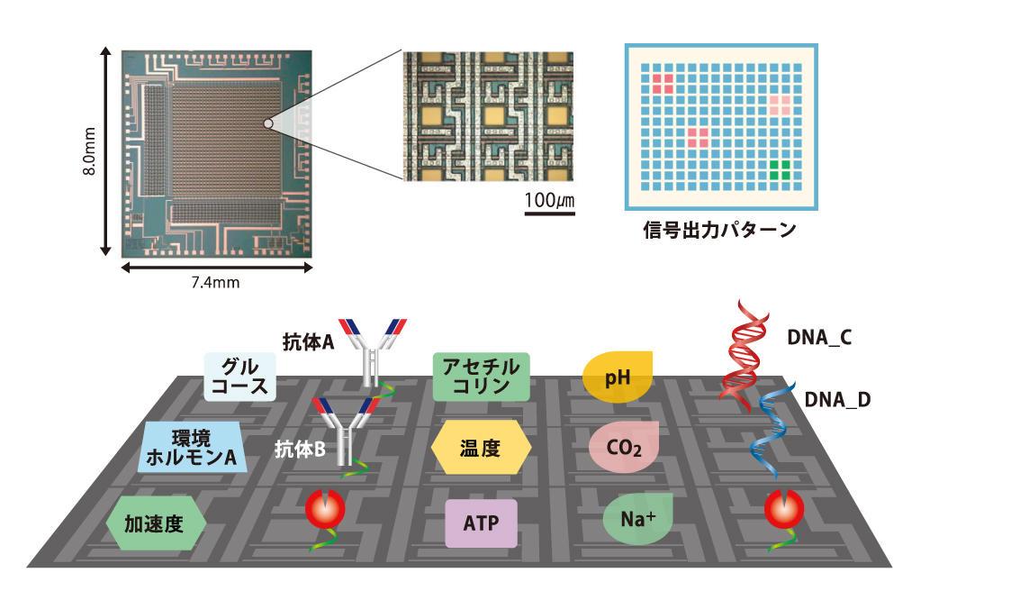 物理・化学情報をミクロンレベルで可視化するマルチモーダルセンシング技術の 創出