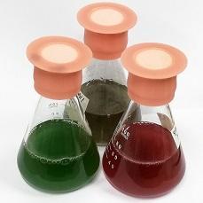 藻類を利用した機能性食品の開発