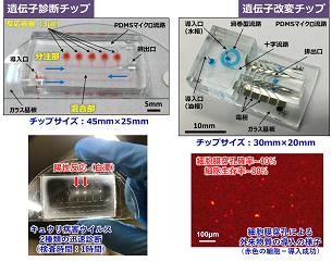 マイクロ流体チップテクノロジーで食の安全を診る・操る